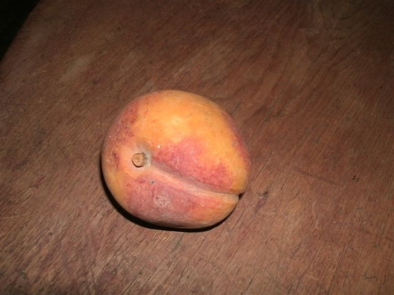 # 204 Early Large Peach