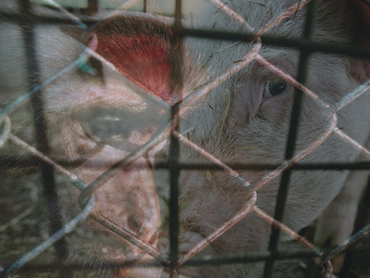 Confronting a Shared Responsibility: Europe's Role in Asia's (Illegal) Wildlife Trade