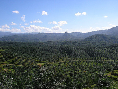 Europe and Indonesia at Odds: The Ongoing Debate over the European Union's Palm Oil Legislation
