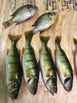 FISHING THE POND