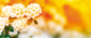Home Uniflowers