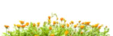 Uniflowers