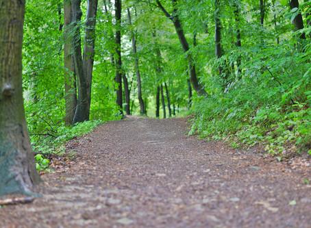 Jane's Walk 2019 v Celju /  Življenje med reko in gozdom (urbani sprehod po Liscah)
