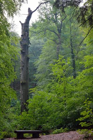 Mestni gozd Celje