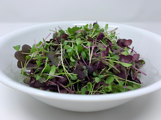 Microgreen salad 2.png