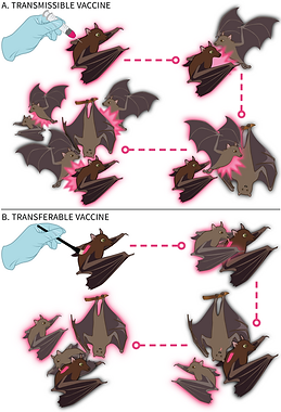 Nuismer-Transmissible-Vaccine-Figure-1.p
