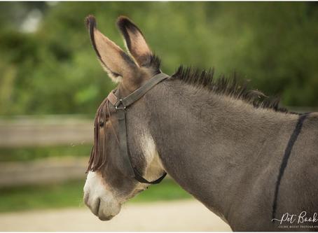 6 Anes de thérapie cherchent un/e thérapeute avec le cheval