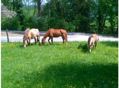 Pension pour 1 cheval à la retraite