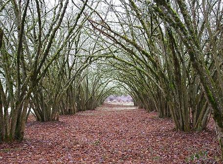 Filbert orchard, Willamette Mission State Park.jpg