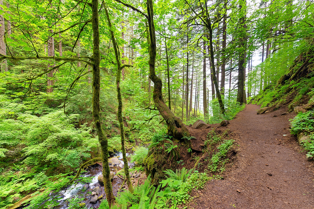 Best Trails in Santiam State Forest