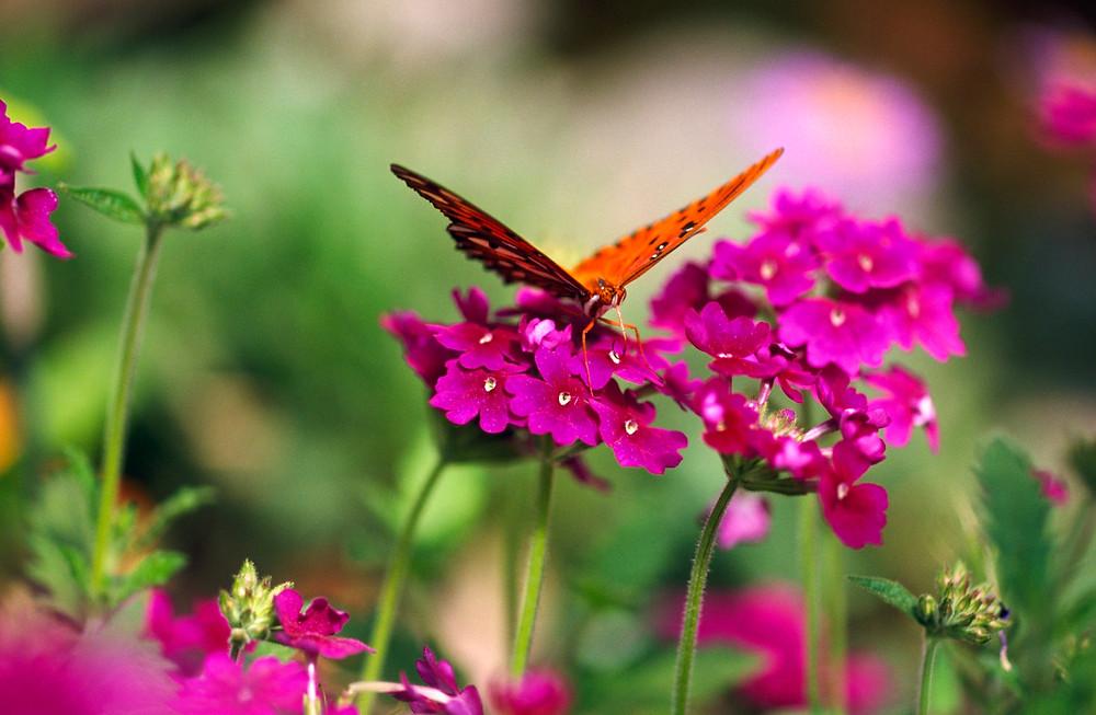 Oregon Botanical Garden flowers