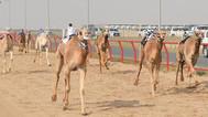 «القطرية» تهيمن على منافسات اليوم الثالث لبطولة الكويت الدولية لسباقات الهجن