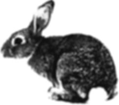 Refinery ArtSpace - rabbit.jpg