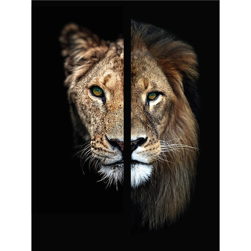 Two Face Lion