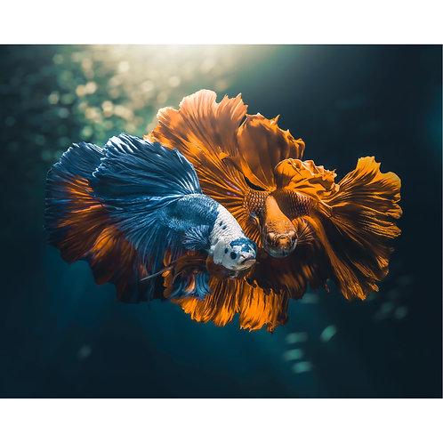 Colorfull Fish