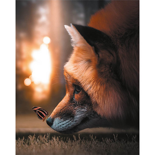 Butterfly and the Fox