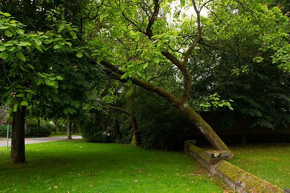 04_Les arbres amoureux.jpg