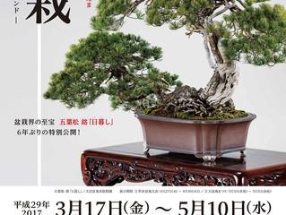 「第8回世界盆栽大会inさいたま」記念特別展 3/17-5/10