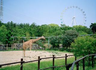 THU. 8/10 – SUN. 8/27 ZOO -house of giraffe- Hidekazu Maiyama