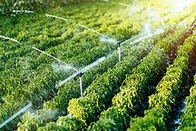 irrigation-system-in-function-JP4JMSH.jp