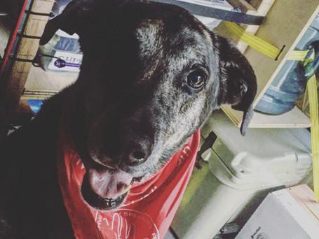 Leroy, the goodest boy