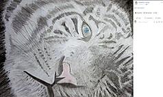 20170418-White-Tiger-finished.jpg