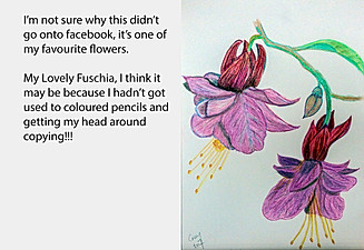 20170715-Fuschia-Finished.jpg