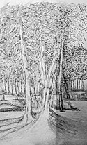 20170509-Trees-Practice-finished.jpg