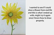 20170713 Sunflower finished.jpg