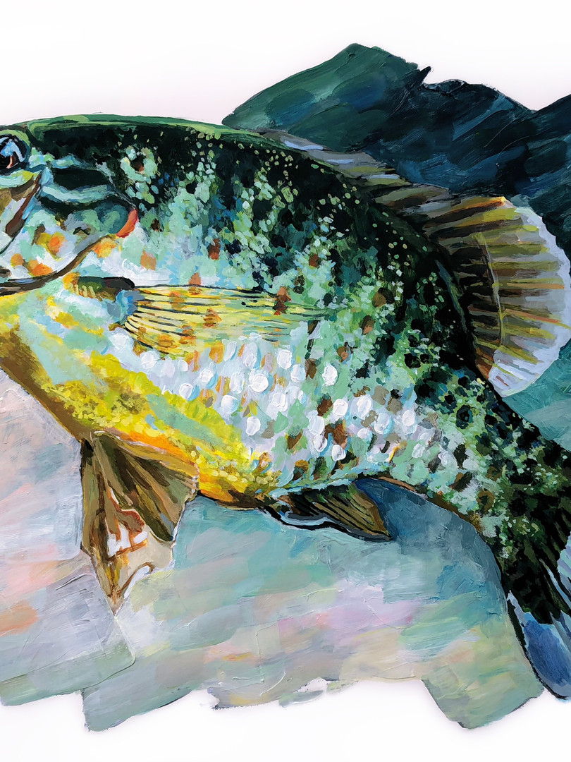 Pumpkinseed Fish Study