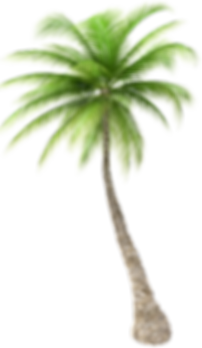 —Pngtree—coconut tree_3990102 cópia.png