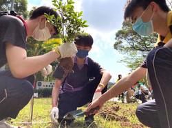 齊來當樹藝師和園藝師