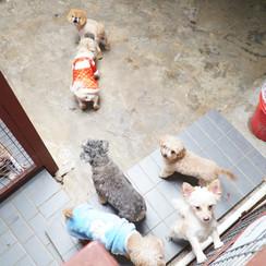 Zoom住學語文 線上探訪狗隻暫托中心