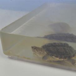 鱷龜陪你學英文