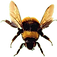 bee_2.png