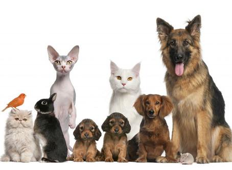 Pet food delivery in crescita