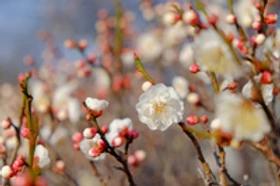 「話題満載の春!」