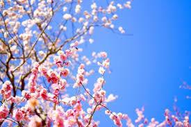 「冬来たりなば春遠からじ」