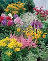 020522-Collection-de-15-plantes-vivaces_