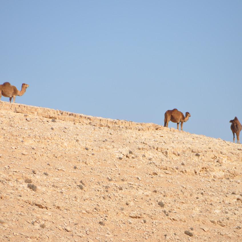 Hacia el Mar Muerto