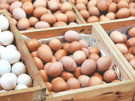 雞蛋裏面裝著的,是母雞和小雞可憐的一生