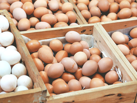 Eggs - To Eat or Not to Eat based on the new Dietary Guidelines