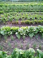 natuurlijke tuinbouw.jpg