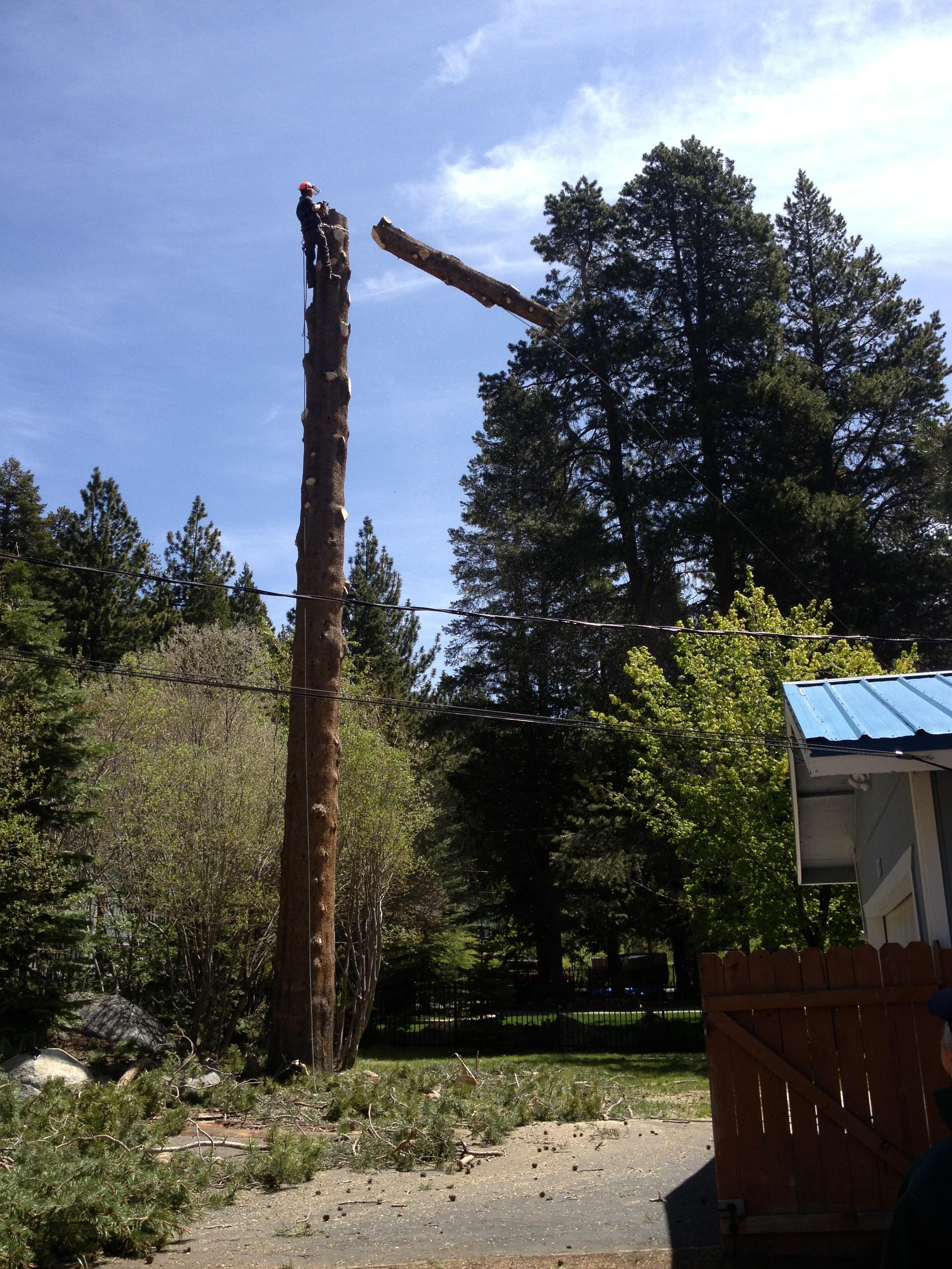 tree removal in progress