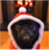 Pug Christmas.JPG