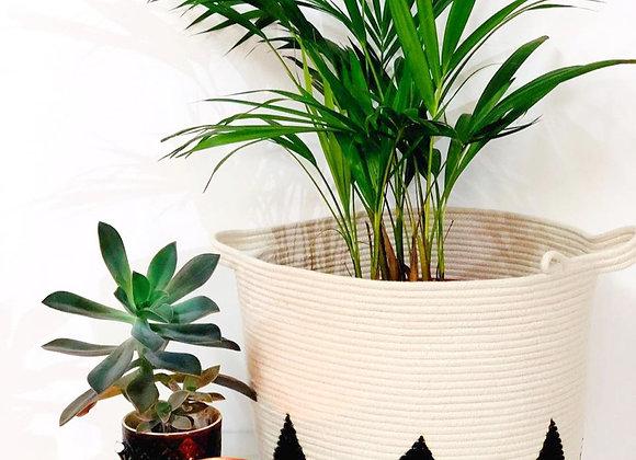 Trikon Planter