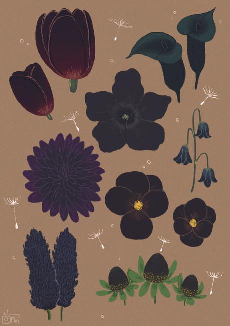 Dark Flora WeAreZanna Magazine Page