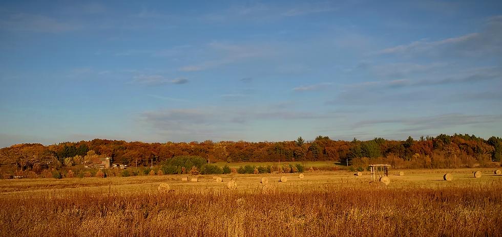 Hay bales cut field Marshall Bluff Rd AD