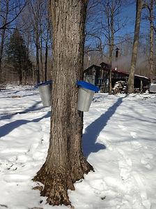 arbre et chaudiere .JPG
