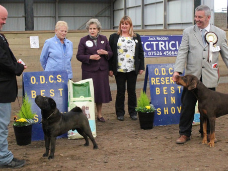 Photos of our breed Show Sept. 2015